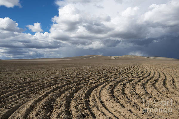 Field Poster featuring the photograph Furrows Before The Storm by Mike Dawson