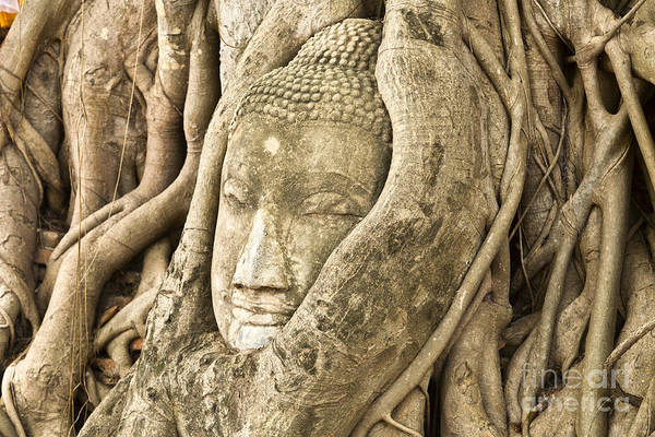 Ancient Poster featuring the photograph Head Of Buddha Ayutthaya Thailand by Colin and Linda McKie