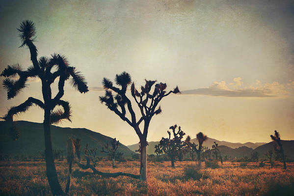 Joshua Tree National Park Poster featuring the photograph In Your Arms As The Sun Goes Down by Laurie Search