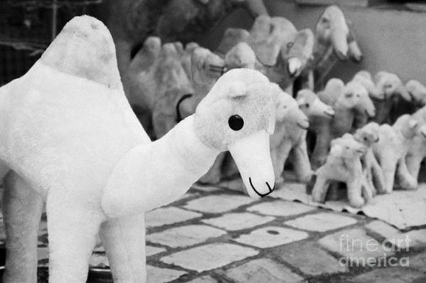 Tunisia Poster featuring the photograph Large Soft Toy Stuffed Camel Souvenir At Market Stall In Nabeul Tunisia by Joe Fox