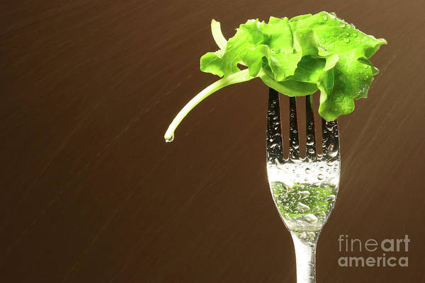 White Poster featuring the photograph Leaf Of Lettuce On A Fork by Sandra Cunningham
