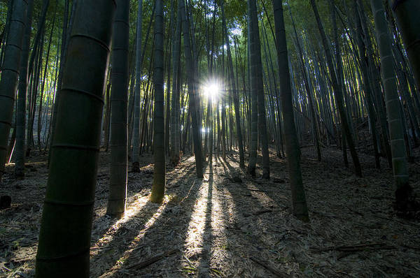 Bamboo Poster featuring the photograph Light At The End by Aaron S Bedell