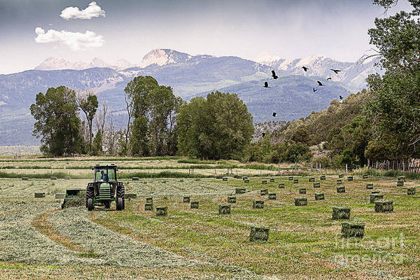 Agriculture Poster featuring the photograph Mancos Colorado Landscape by Janice Rae Pariza