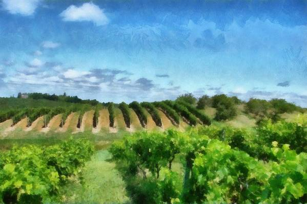 Vineyards Poster featuring the photograph Mission Peninsula Vineyard Ll by Michelle Calkins