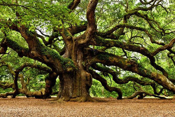 Angel Oak Photographs Poster featuring the photograph Mystical Angel Oak Tree by Louis Dallara