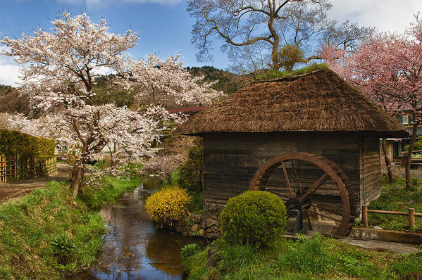 Cherry Blossom Poster featuring the photograph Old Cherry Blossom Water Mill by Sebastian Musial