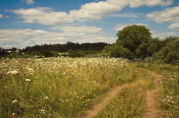 Meadow Poster featuring the photograph On The Summer Meadow II. Russia by Jenny Rainbow