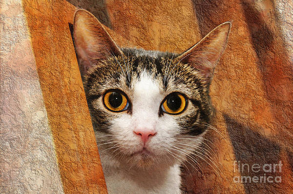 Animal Poster featuring the photograph Peek A Boo I See You by Andee Design