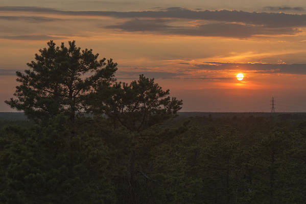 Pine Barrens Sunset Nj Poster featuring the photograph Pine Barrens Sunset Nj by Terry DeLuco