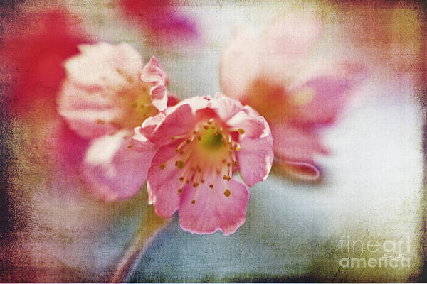 Lensbaby Poster featuring the photograph Pink Blossom by Scott Pellegrin