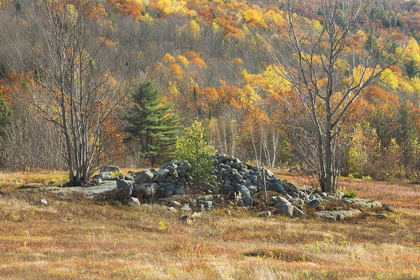 Maine Poster featuring the photograph Rock Pile In Maine Blueberry Field by Keith Webber Jr
