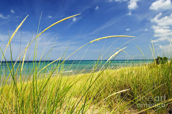 Beach Poster featuring the photograph Sand Dunes At Beach by Elena Elisseeva