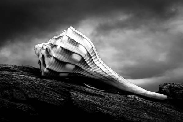 Shell Poster featuring the photograph Seashell Without The Sea by Bob Orsillo
