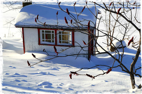 Shed Poster featuring the photograph Shed In Winter by Sophie Vigneault