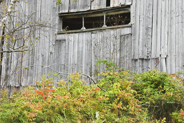 Building; Old; Old Building; Abandoned; Run-down; Architecture; Shed; Shack; Grunge; Structure; Window; Fall; Autumn; Weathered; Overgrown; Weeds; Country; Building Exterior; Rural; Rustic; Grass; Overcast; Wood; Siding; Maine; New England; Old Barn In Maine; Maine Barns; Old Barn; Weather Wood; Wooden Siding; Fall Foliage; Abandoned Building; Rustic; Rusctic Building; Maine Countryside; Country Living; Weathered Building; New England Barn Poster featuring the photograph Side Of Barn In Fall by Keith Webber Jr