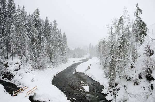 Winter Poster featuring the photograph Snow Landscape - Trees And River In Winter by Matthias Hauser