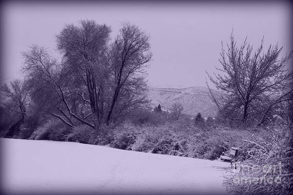 Winter Poster featuring the photograph Snowy Bench In Purple by Carol Groenen
