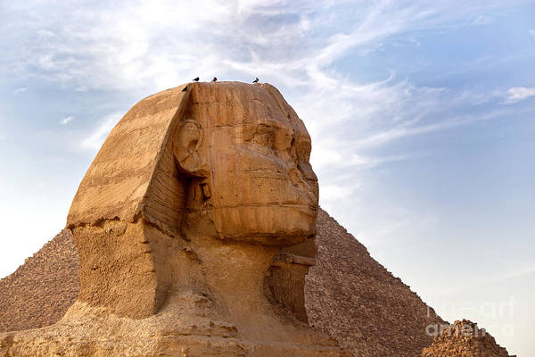 Africa Poster featuring the photograph Sphinx Egypt by Jane Rix