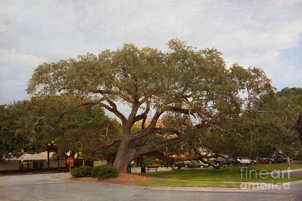Live Oaks Poster featuring the photograph Stop And Rest by Kay Pickens