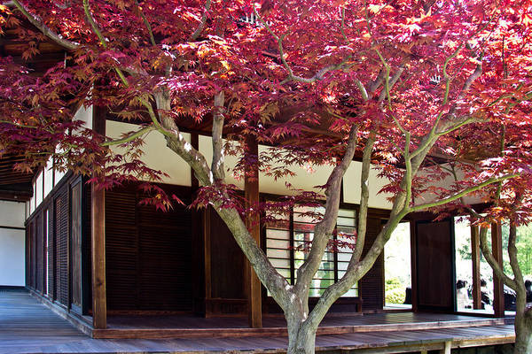 Shofuso Poster featuring the photograph Tea House Thru The Maple by Tom Gari Gallery-Three-Photography