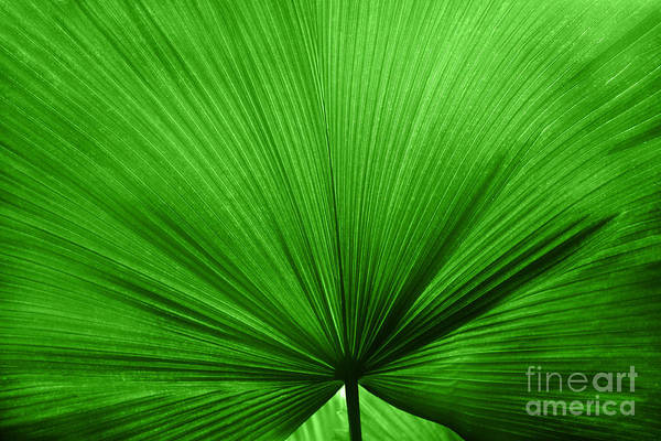 Leaves Poster featuring the photograph The Big Green Leaf by Natalie Kinnear