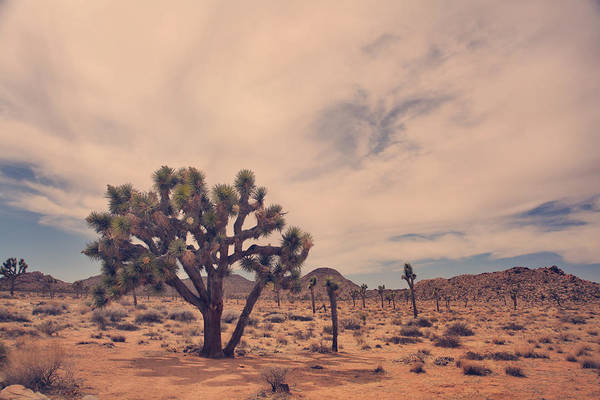 Joshua Tree National Park Poster featuring the photograph The Feeling Of Freedom by Laurie Search