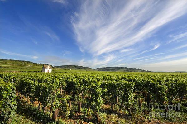 Area  Poster featuring the photograph Vineyard Hut. Vineyard. Cote De Beaune. Burgundy. France. Europe by Bernard Jaubert