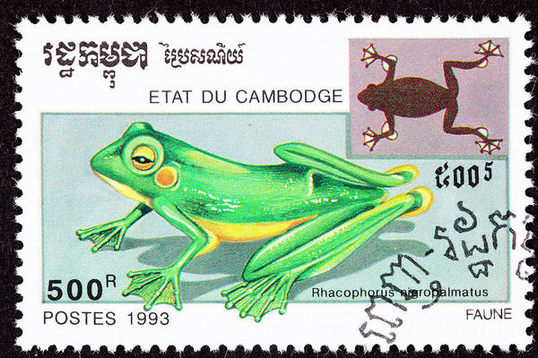 Photograph Poster featuring the photograph Wallace's Flying Frog by Jim Pruitt