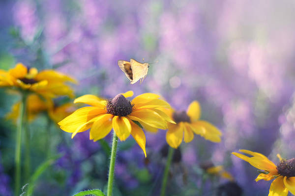 Butterflies On Flowers Poster featuring the photograph Wanderlust by Amy Tyler