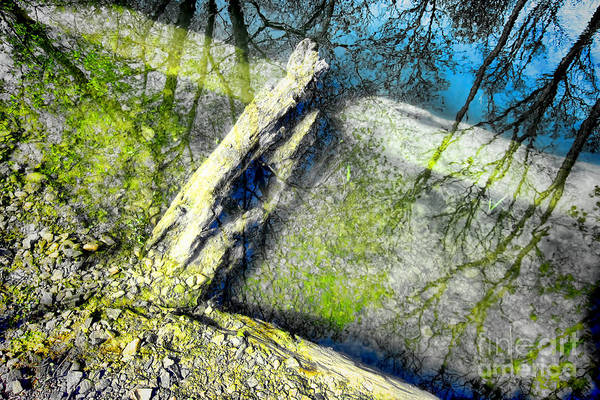 Abstract Poster featuring the photograph Wood Reflections by Olivier Le Queinec