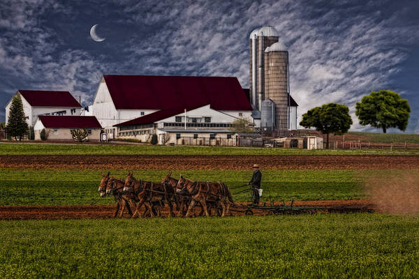 Amish Poster featuring the photograph Working The Fields by Susan Candelario