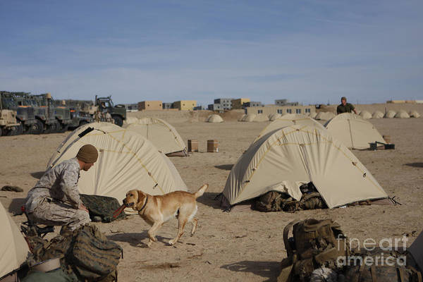 Operation Enduring Freedom Poster featuring the photograph A Dog Handler And His Military Working by Stocktrek Images