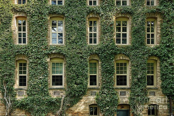 Ivy League Poster featuring the photograph Ivy League by John Greim