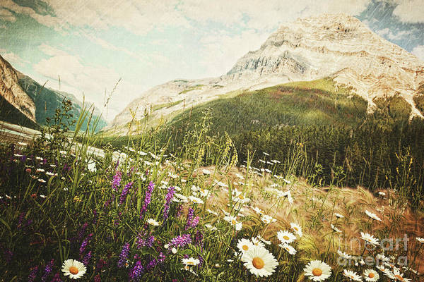 Adventure Poster featuring the photograph Field Of Daisies And Wild Flowers by Sandra Cunningham