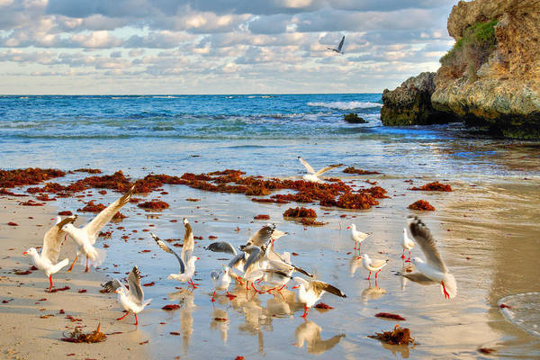 Gulls Poster featuring the photograph Two Rocks Wa by Imagevixen Photography