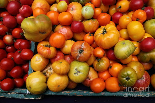 Tomato Poster featuring the photograph A Variety Of Fresh Tomatoes - 5d17812 by Wingsdomain Art and Photography