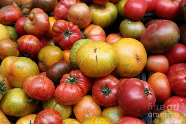 Tomato Poster featuring the photograph A Variety Of Fresh Tomatoes - 5d17840 by Wingsdomain Art and Photography
