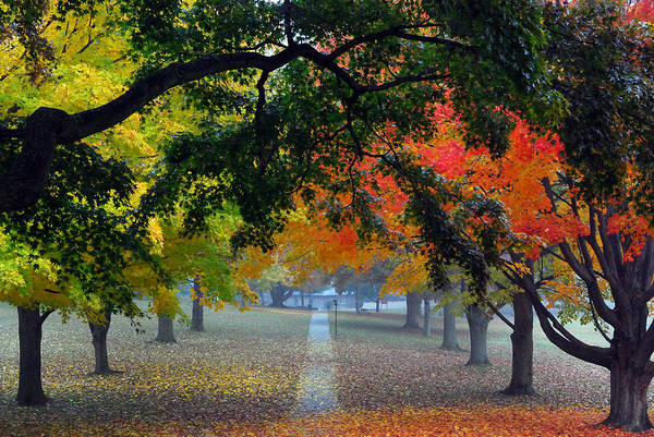 Landscapes Poster featuring the photograph Autumn Canopy by Lisa Phillips