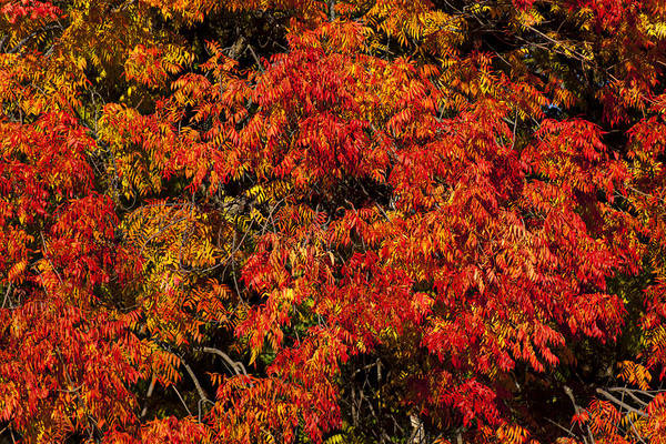 Autumn Poster featuring the photograph Autumn Red by Garry Gay