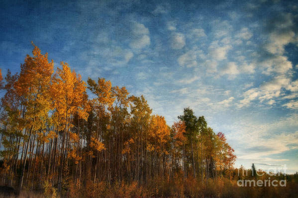 Fall Poster featuring the photograph Dressed In Autumn Colors by Priska Wettstein