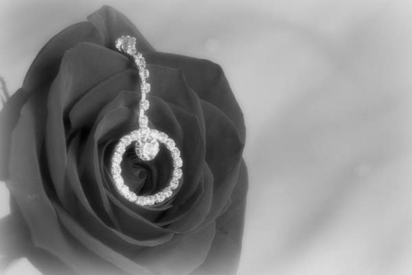 Rose Poster featuring the photograph Elegance In Black And White by Mark J Seefeldt