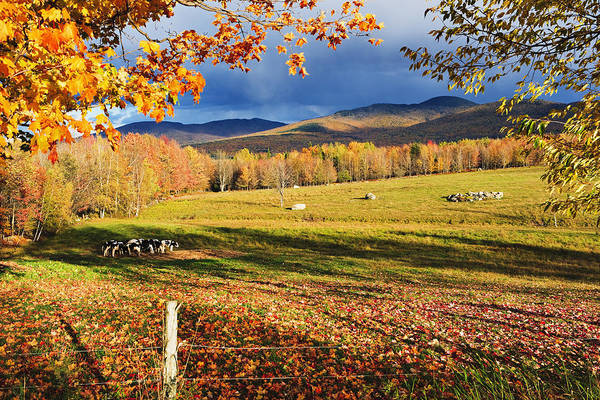 Canton De Lest Poster featuring the photograph Fall Colours, Cows In Field And Mont by Yves Marcoux