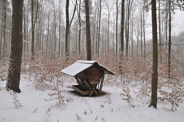 Forest Poster featuring the photograph Feed Box In Winterly Forest by Matthias Hauser