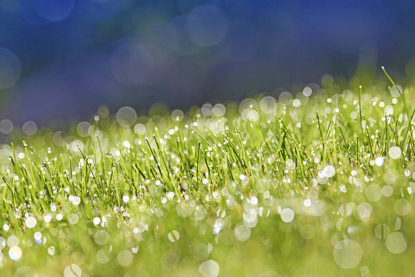 Horizontal Poster featuring the photograph Grass, Close-up by Tony Cordoza