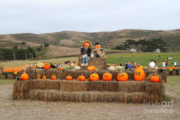 Pumpkin Poster featuring the photograph Halloween Pumpkin Patch 7d8478 by Wingsdomain Art and Photography