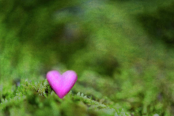 Horizontal Poster featuring the photograph Heart In Moss by Alexandre Fundone