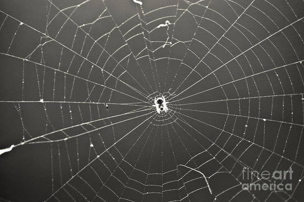 Spider Poster featuring the photograph Itsy Bitsy Spider by Leslie Leda