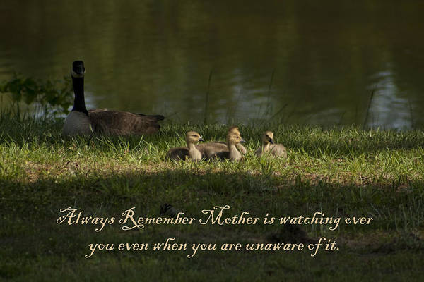 Mother Poster featuring the photograph Mother's Watchful Eye by Kathy Clark
