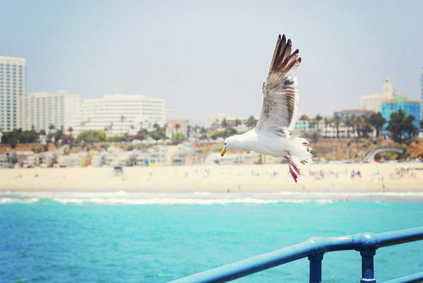 Horizontal Poster featuring the photograph Seagull Flying by Libertad Leal Photography