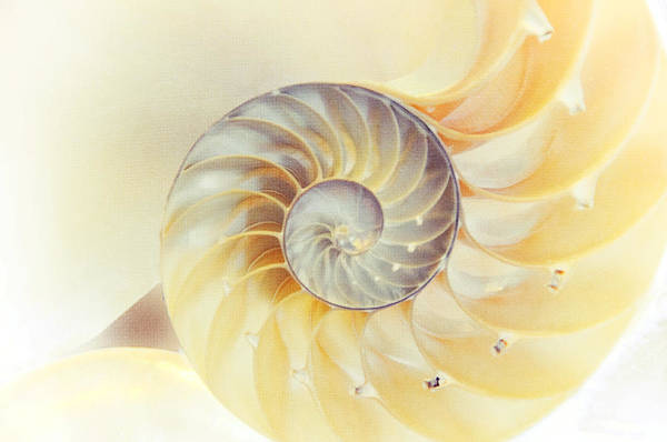 Seashell Poster featuring the photograph Seashell. Light Version by Jenny Rainbow